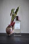 loewe-beetroot-duft Neues Parfum Loewe
